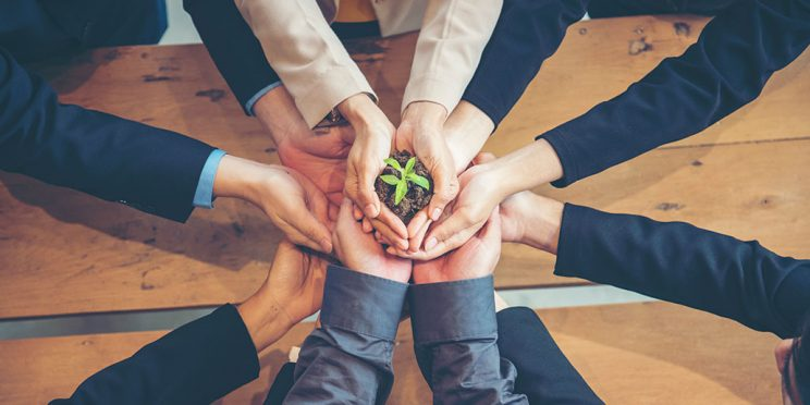 stock photo of hands together with a plant growing from the middle